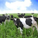 Dairy Processor Uses Knowledge of Probiotics
